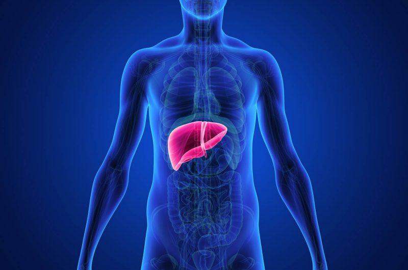 Liver Detoxification – How does it happen?